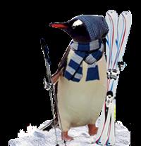 penguin-offers